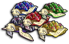 1 set of 5 Color Elder Turtles